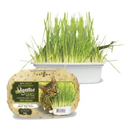 Graminha Para Gatos Digestive Grass 100% Natural 50g