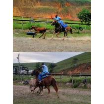 Cavalo Qm - Pronto No Laço Comprido