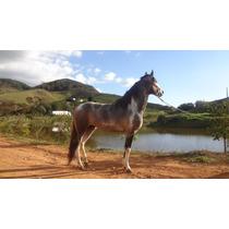 Cavalo Mangalarga Marchador,cobertura A Venda,filho Elo Kafe