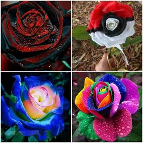 100 Sementes Raras Mix Rosa Arco Iris Rainbow,p Mudas Bonsai