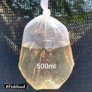 Daphnia Magna Alimento Vivo Porção - P/ Peixes Alevinos