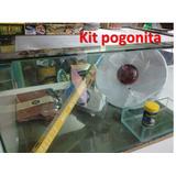 Kit Completo Terrario, Accesorios Y Alimento Para Pogonita
