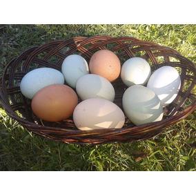 Huevos Mixtos (azul, Verde Y Cafe )
