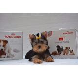Kit De Bienvenida Royal Canin Mini Junior Ideal Criaderos