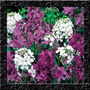 Dames Rocket Hesperis Perfumada Sementes Flor Para Mudas