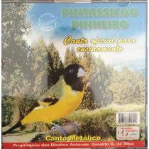 Cd Pintassilgo Pinheirinho ( Canto Metálico )