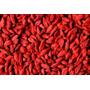 Lote 300 Sementes Goji Berry Plantio + Manual + Frete Grátis