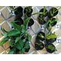 5 Variedades De Cactus Y Suculentas