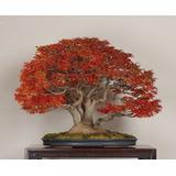 Curso-básico-de-bonsai N°2