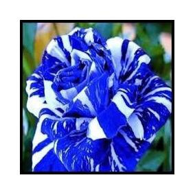 50 Sementes Rosa Dragão (azul E Brancal) Rara P Mudas