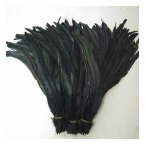 200 Plumas De Gallo Negras En 2,000 Pesos