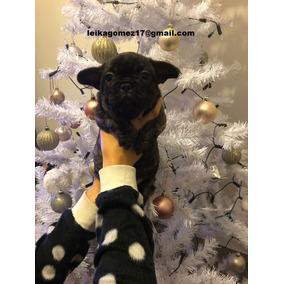 ~~~~ Cachorros De Bulldog Francés De Navidad Listos Para Nue