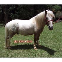 Mini Horse, Mini Cavalo, Mini Ponei, Ponei