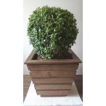 Buxinho Natural No Vaso De Madeira Pinus