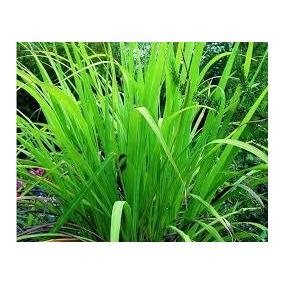 10 Ml Aceite Esencial Palmarosa Cymbopogon Martinii 100% Pur