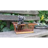 Vendo Hermoso Cachorro Schnauzer Mini (sal Y Pimienta)