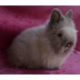 Conejos Cabezas De León