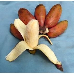 2 Hijuelos De Plátano Morado