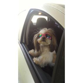Óculos De Sol Para Cães Com Proteçao Uv + Case.