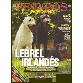 Revista De Perro El Lebrel Irlandés Del 2013 Envio Gratis