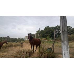 Cavalo Manso Manga Larga Machador