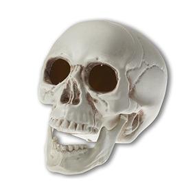 Esquelético Del Cráneo De Mirada Realista Prextex 6,5 Pulgad
