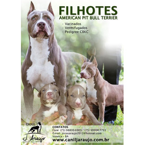 Cachorros Filhotes Pit Bull Terrier