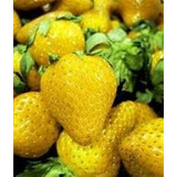 200 Sementes De Morango Amarelo Raro Super Promoção