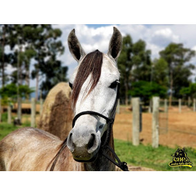 Venda de cobertura de cavalos mangalarga marchador