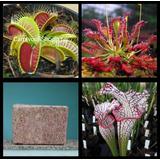 Kit Sementes Plantas Carnívoras + 100 Gr Musgo - Ornamentais