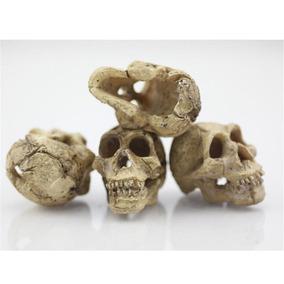 Enfeite Decorativo Crânio Humano P/ Aquários, Terrário - 1u