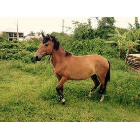 Cavalo - Égua Quarto De Milha - Está Prenha