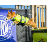 Salvavidas - Chaleco Mascota Talle S - 7/9 Kgs.
