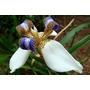 Oferta Coleccion 6 Especies + Sustrato + Fertilizante