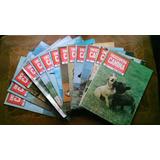 Lote 13 Revistas Enciclopedia Razas Caninas Fiorenzo Fiorone