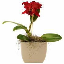 30 Sementes De Orquídeas Vermelhas Super Promoção