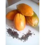 Semillas De Papaya Tropical Seleccionadas 98% Germinacion