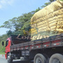 Encerado 7x4 Lona De Algodão Caminhão Toco Truck Ocre +iho