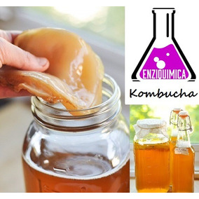Kombucha Real Probiótico Tea Scoby + Manual + Frete Gratis