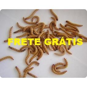 Tenebrio Molitor - 200 Larvas Vivas Frete Grátis