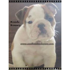 Bulldogue Ingles Parcelado