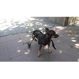 Carrito Ortopédico Para Animales Pequeños