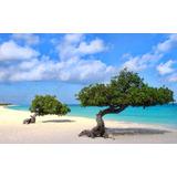Alquilo Semana De Resort Para Aruba / Florida