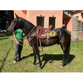 Garanhão - Cavalo Manga Larga Machador