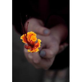 Foto Digital Original Flor De Mariana