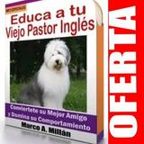Guía De Entrenamiento Para Perro Pastor Inlges 3