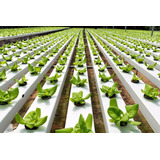 Kit Nutrientes Hidroponia Alface 5.000 Litros Solução Nutrit
