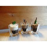Recuerdos Cactus Suculentas En Vaso De Cristal Para Fiestas