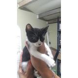 Hermosos Gatitos De 2 Meses En Adopción Responsable