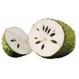 Graviola Guanabana 70 Cm Arbol Frutal, Frutales Exoticos.